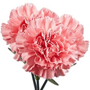 KAY Club is selling carnations for $2